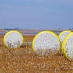 Fardos de algodão