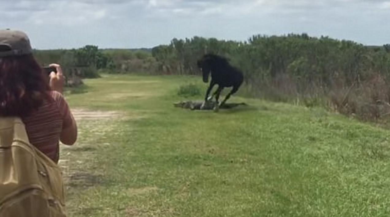 cavaloataca