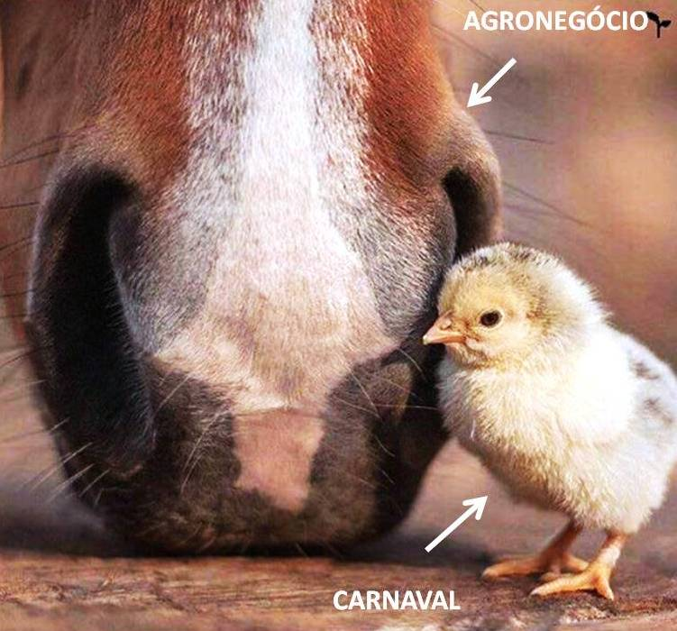 imagem-destacada-carnaval-x-agronegocio