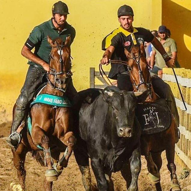 vaquejada_evolucao-dos-competidores-e-protecao-da-montaria