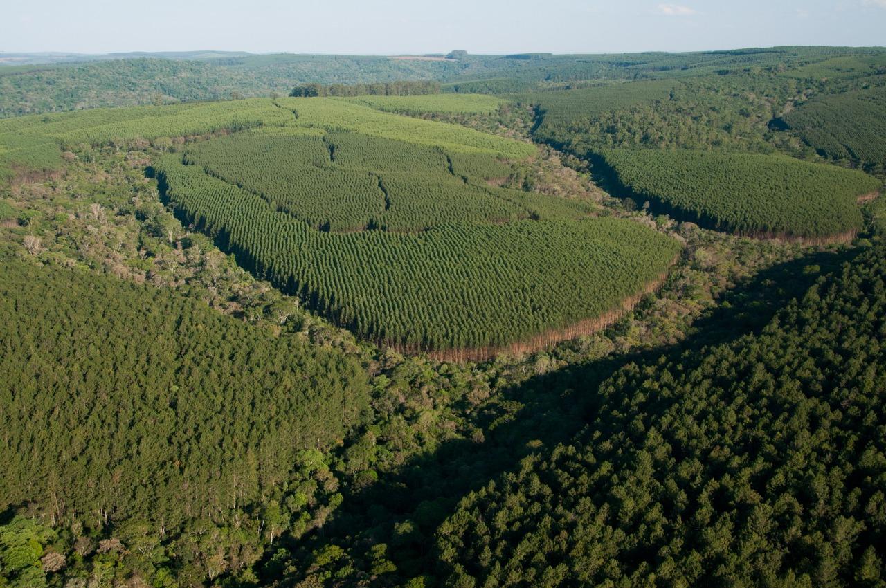 Klabin anuncia compra de 14 mil hectares de floresta plantada de ...