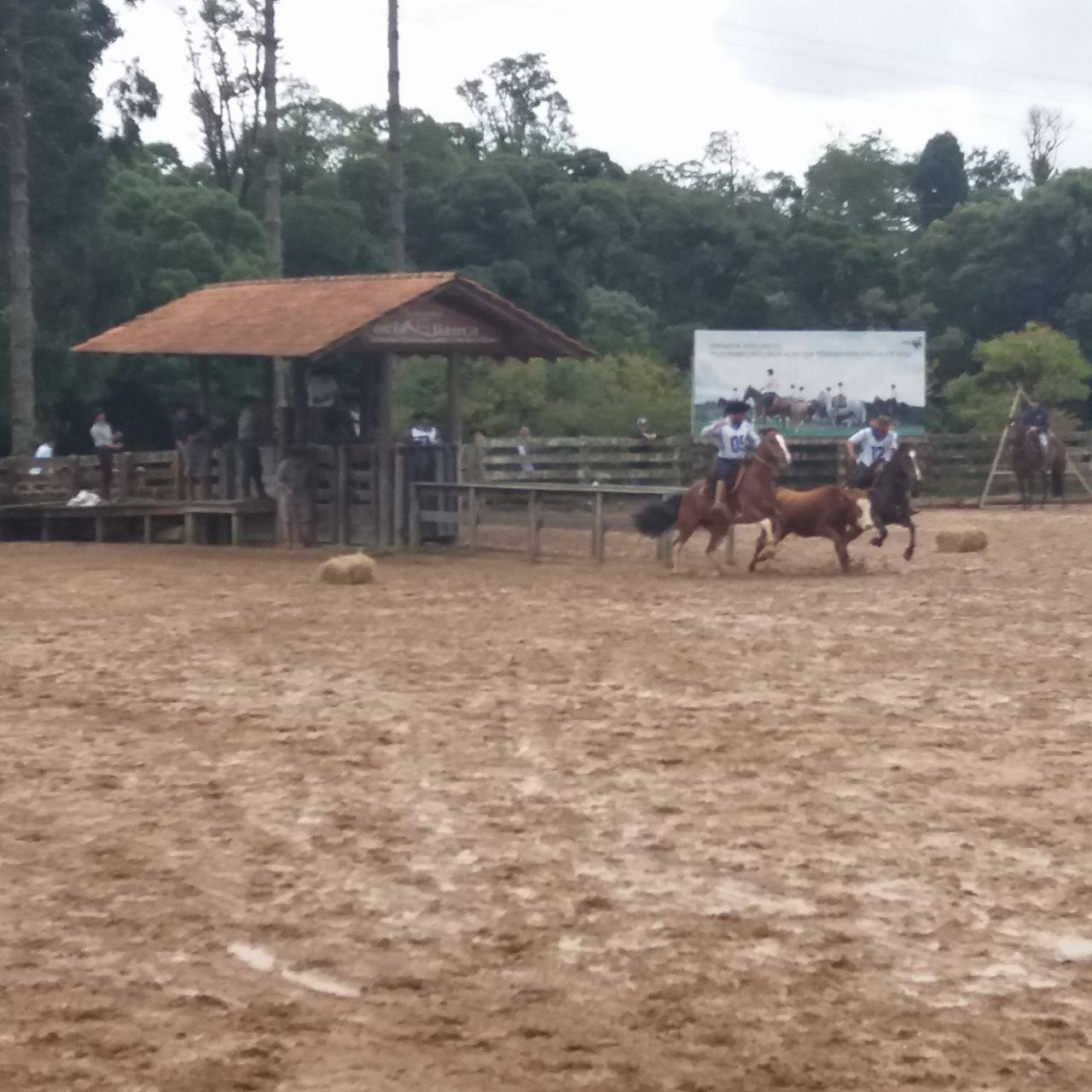 Credenciadora reuniu animais finalistas do Freio e ginetes consagrados