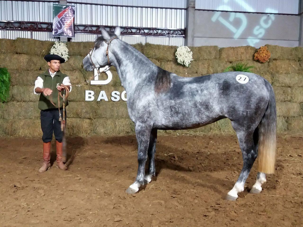 Animais do time de pista da Basca foram ofertados