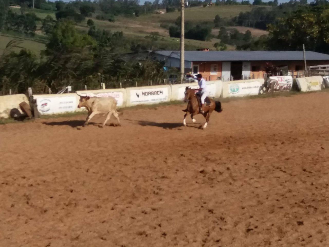 Prova reuniu os cavalos vendidos em 2016