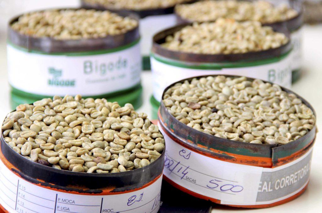 Mostra de grãos de café arábica tipo exportação, em Vitória da Coquista, na Bahia. (Mário Bittencourt)