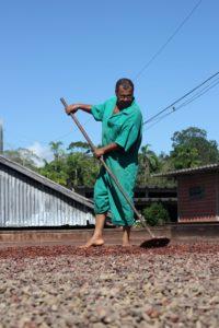 Homem trabalha na secagem do cacau, em Ilhéus (Mário Bittencourt)