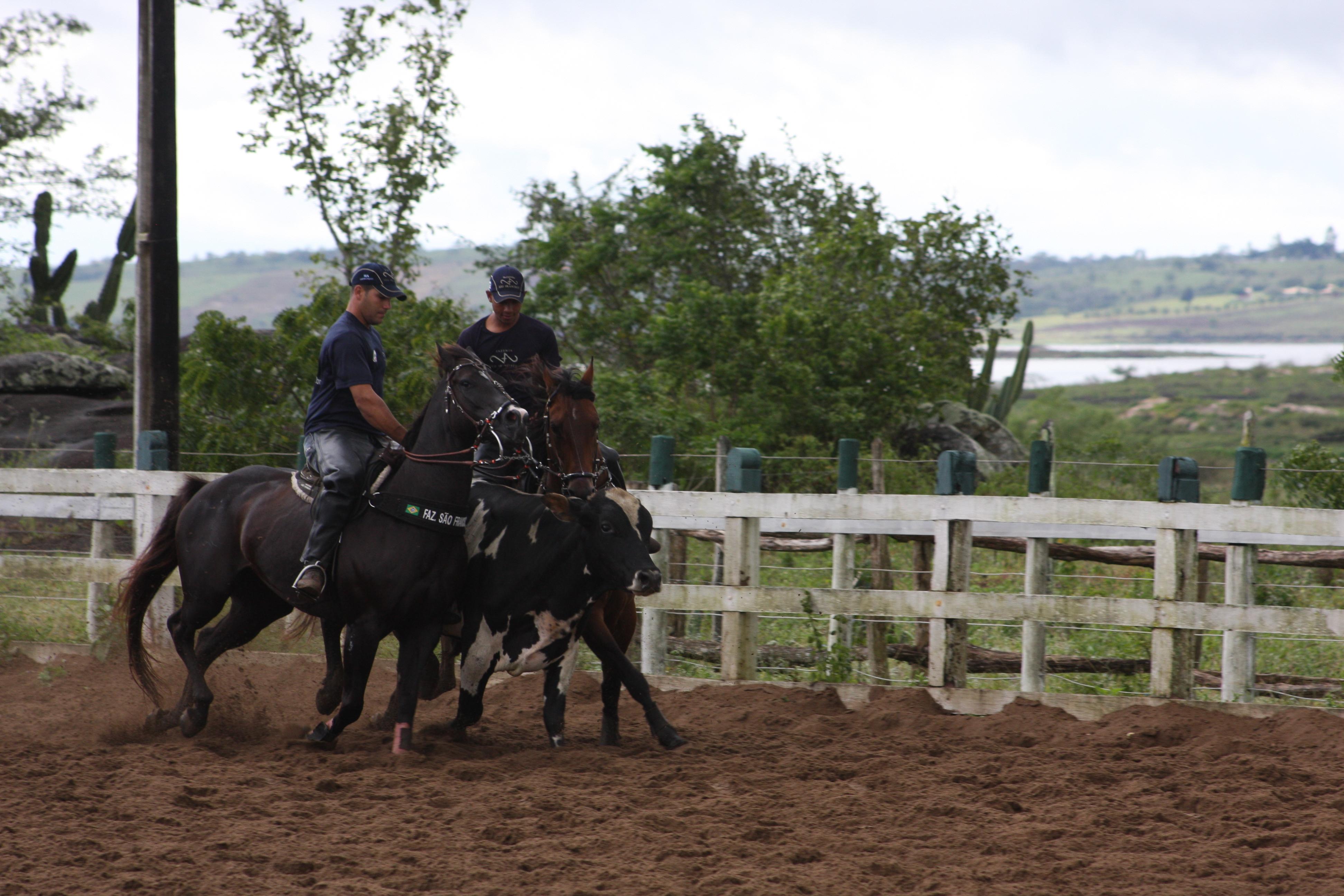 Treinamento Do Cavalo Quarto De Milha Pictures to pin on  ~ Wallpaper Cavalos Quarto De Milha